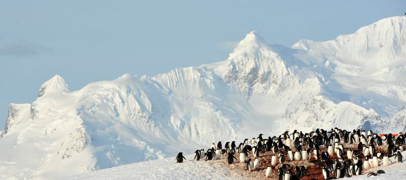 Best holiday destination, hotels deals & weekend getaways in Antarctica